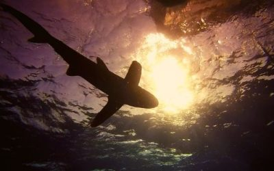 Los tiburones de nuestra vida: miedos de hoy.